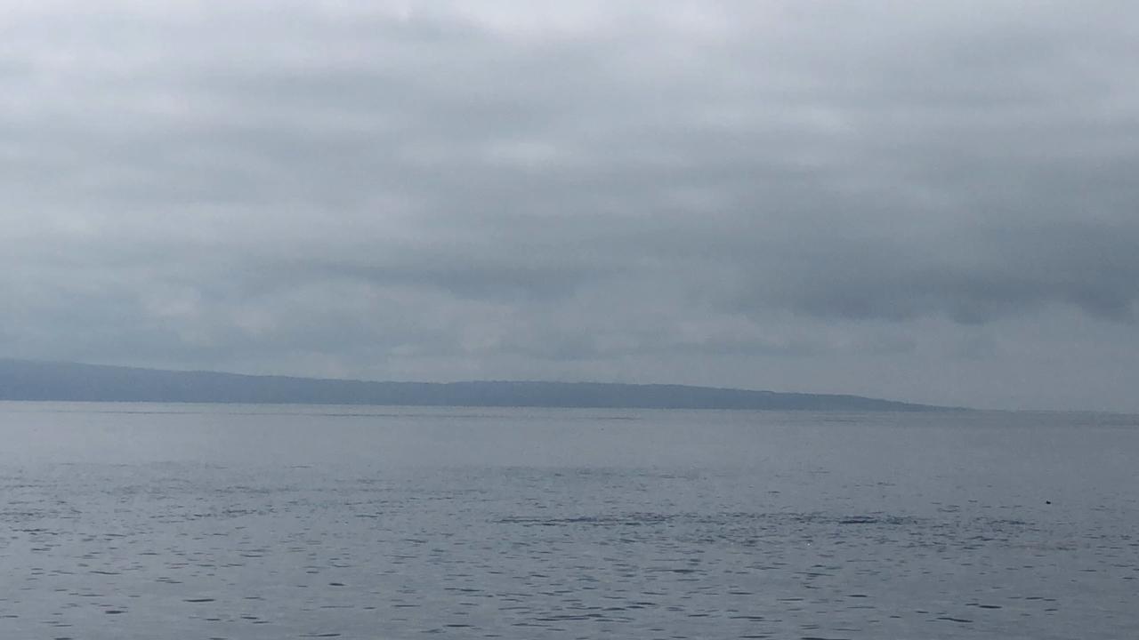 観光船・民宿はまなすの写真・動画_video_1994