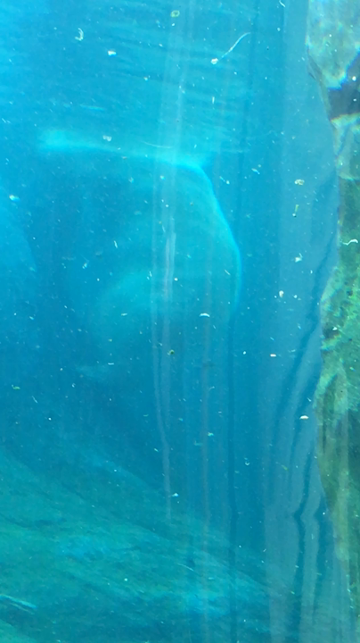 円山動物園の写真・動画_video_2236