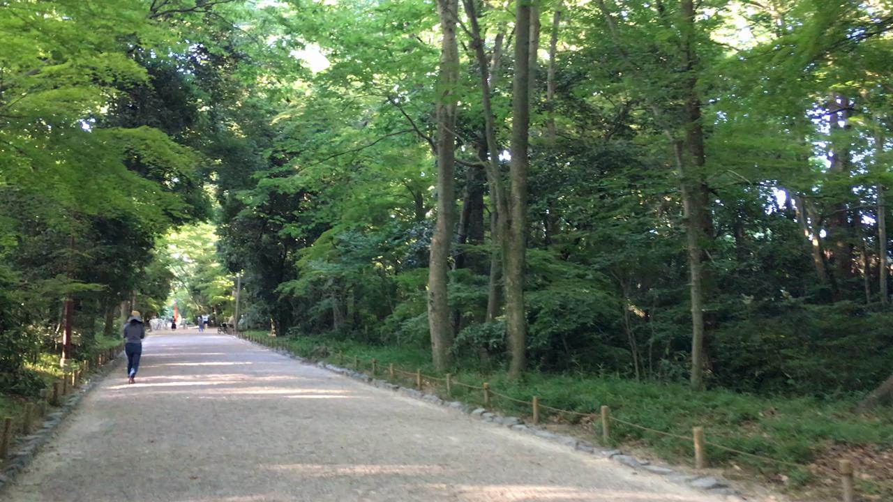 下鴨神社(賀茂御祖神社)の写真・動画_video_2682