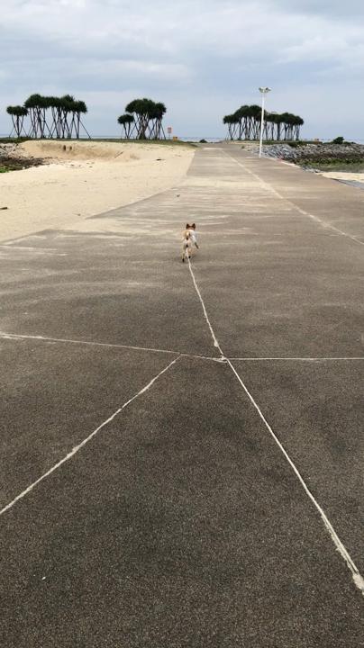 ェメラルドビーチで つぃに リード無しにっ!!