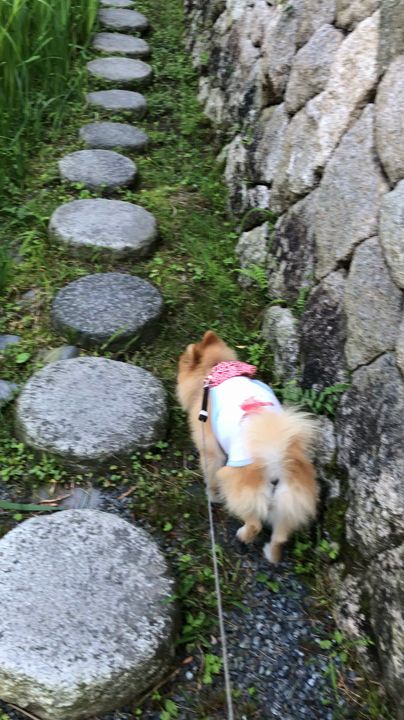 八幡堀の写真・動画_video_4012
