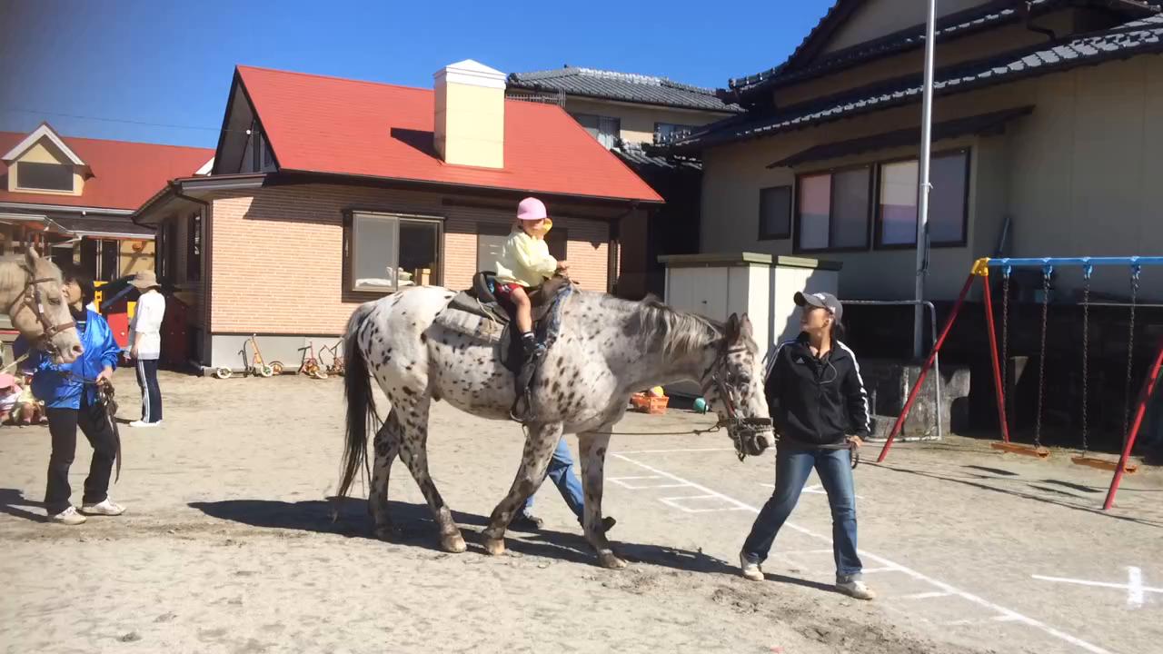お子様にも体験しただける引き馬もあります。