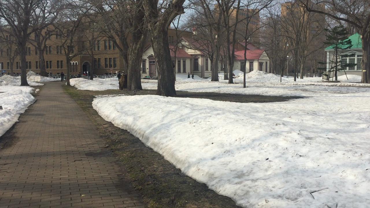まだ雪が残ってます!