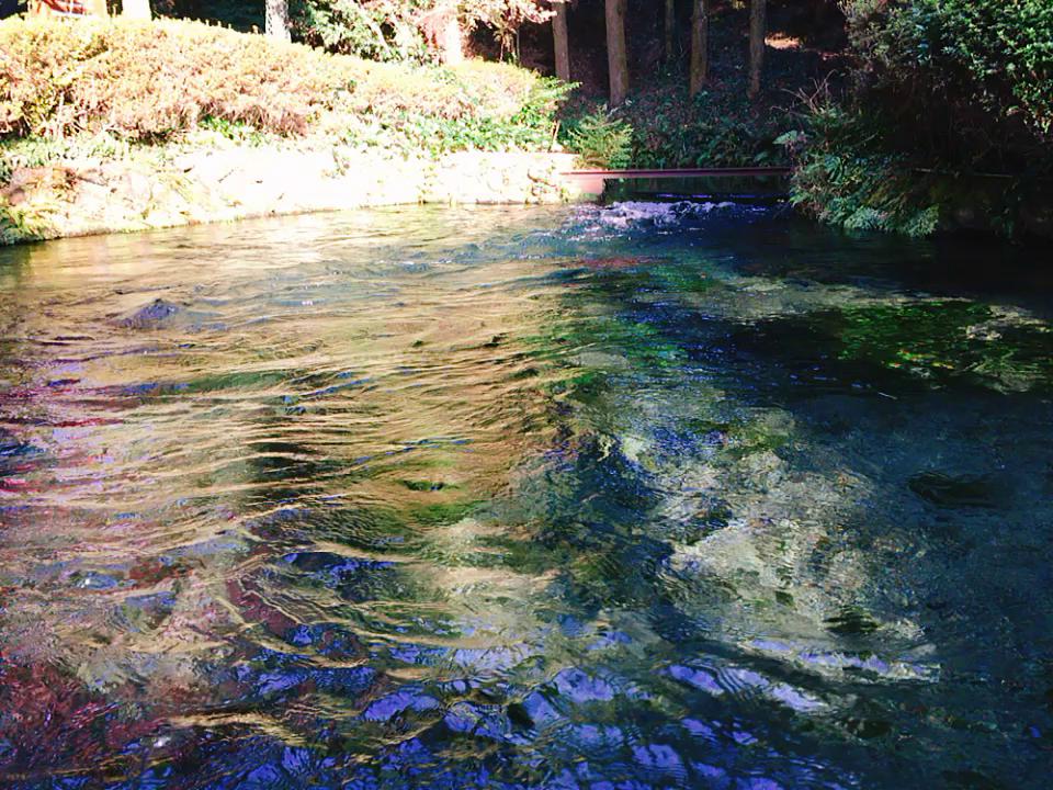 白川水源の写真・動画_video_951