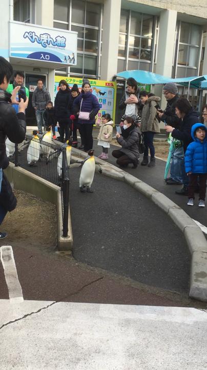 越前松島水族館の写真・動画_video_1037