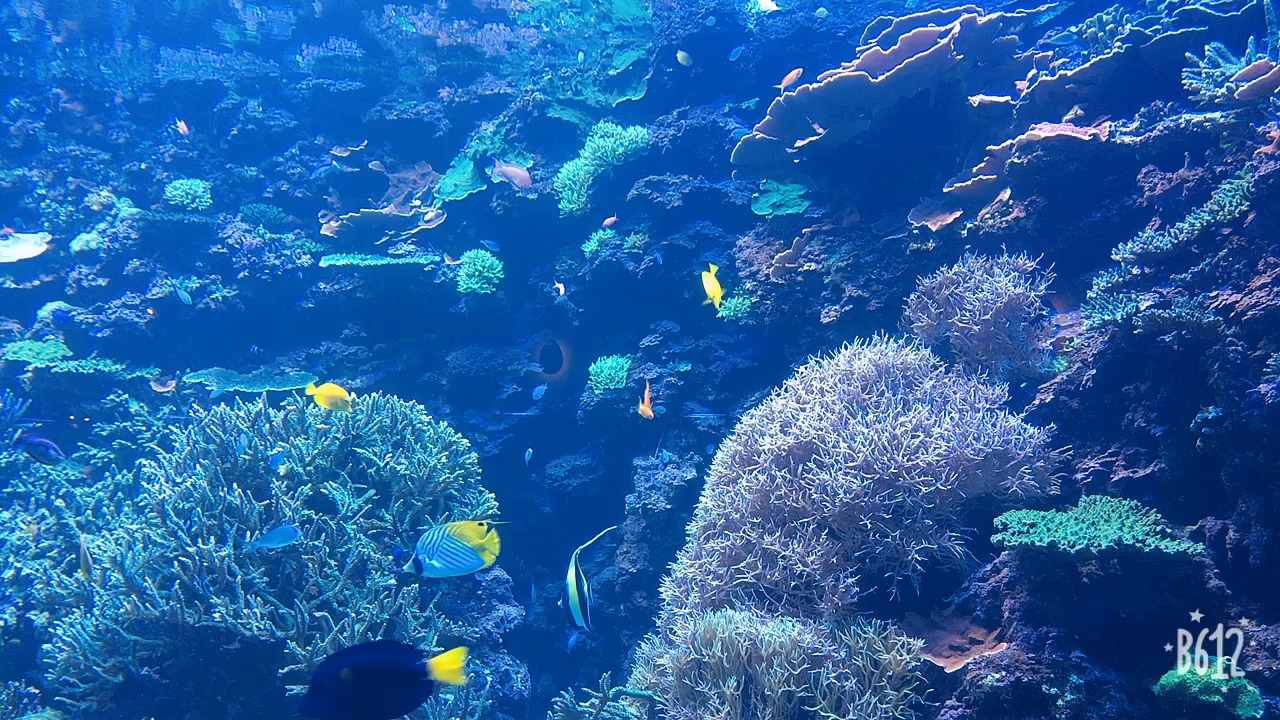 大分マリーンパレス水族館 うみたまごの写真・動画_video_1454