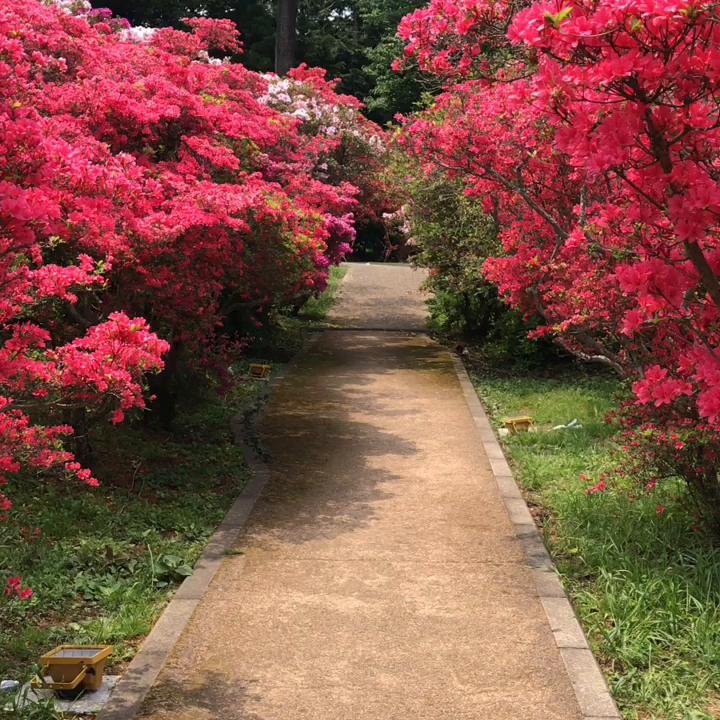 小室山公園の写真・動画_video_434