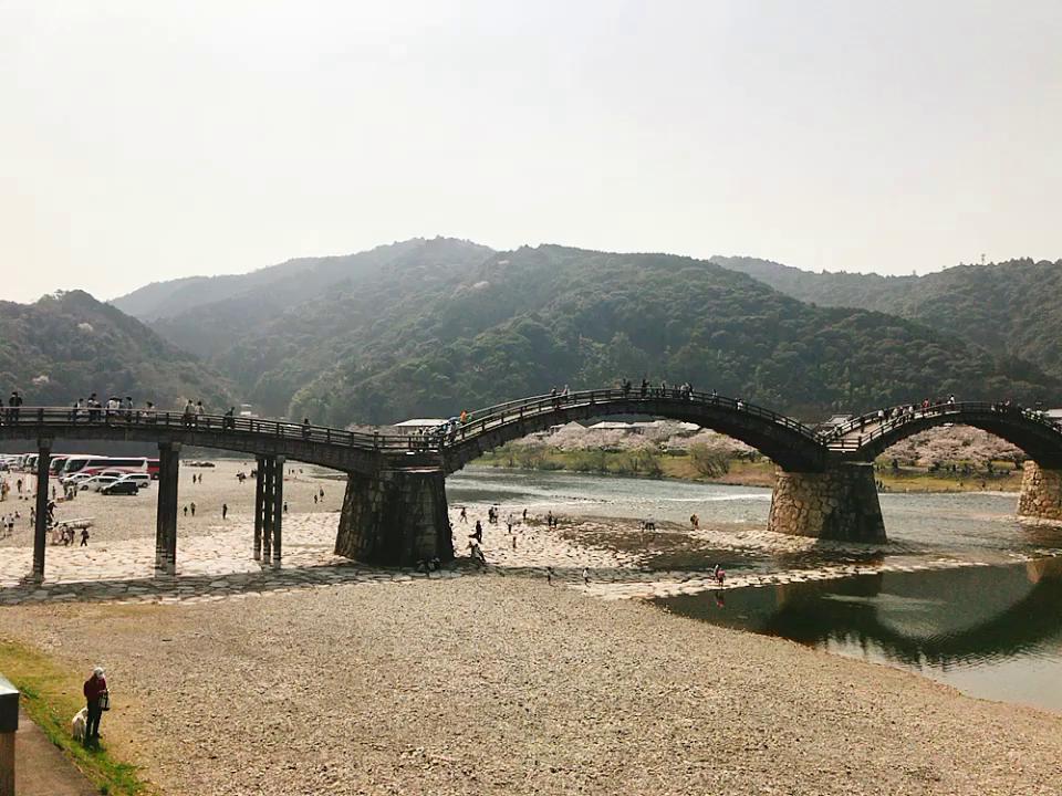 錦帯橋の写真・動画_video_980